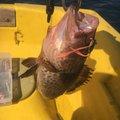 sugiiさんの鹿児島県姶良市での釣果写真