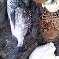 ケンシロウさんの神奈川県足柄下郡での釣果写真