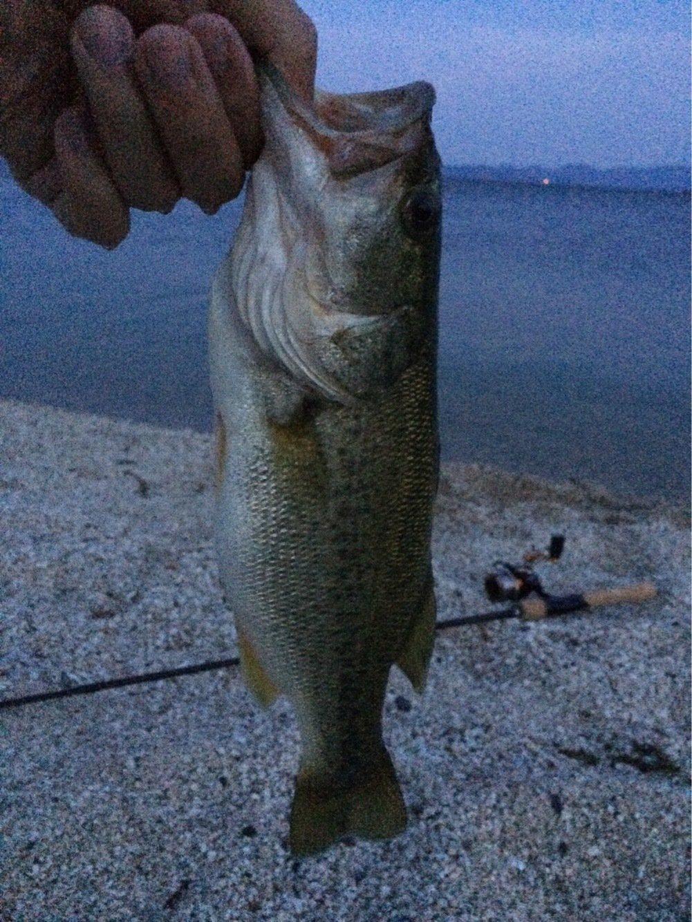 タツヤさんの投稿画像,写っている魚はブラックバス