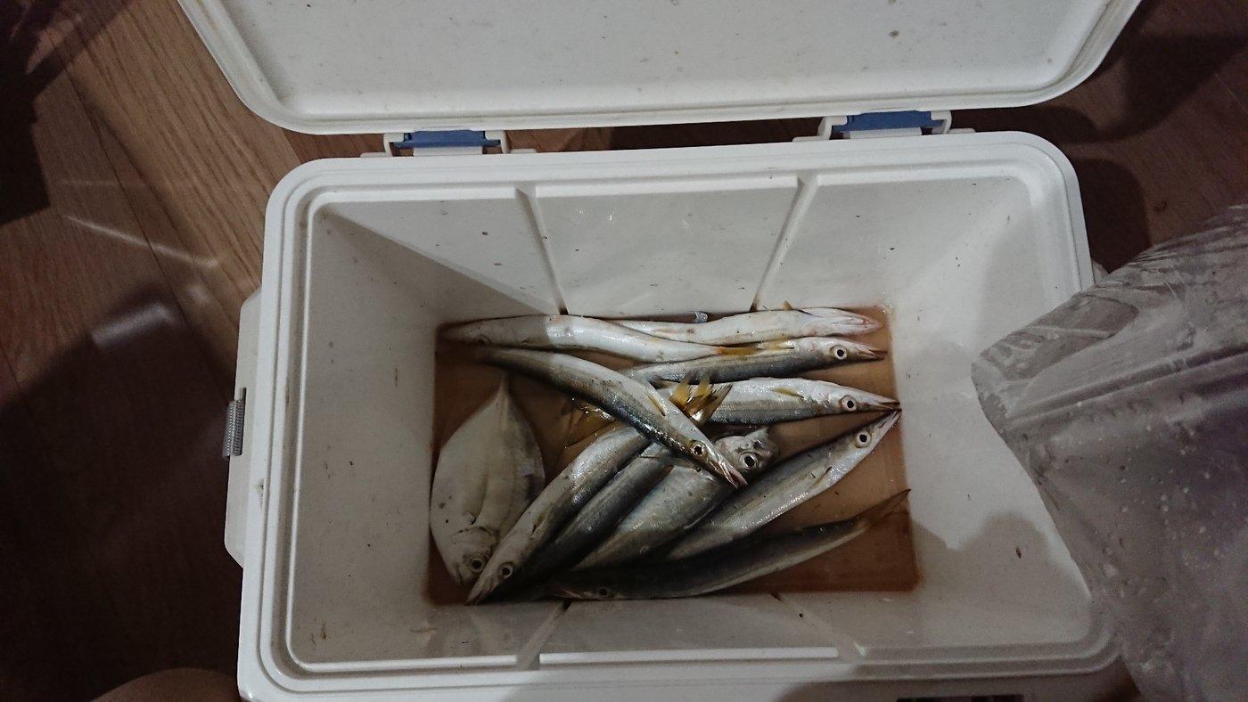 Mizobuchiさんの投稿画像,写っている魚はカマス