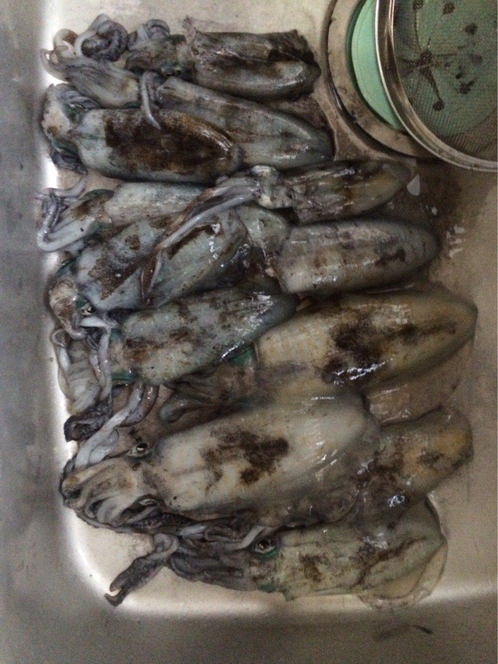 flyfisherさんの投稿画像,写っている魚はアオリイカ
