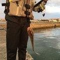 KUROSUKEさんの千葉県でのゴンズイの釣果写真