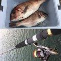 タマさんの千葉県山武市での釣果写真