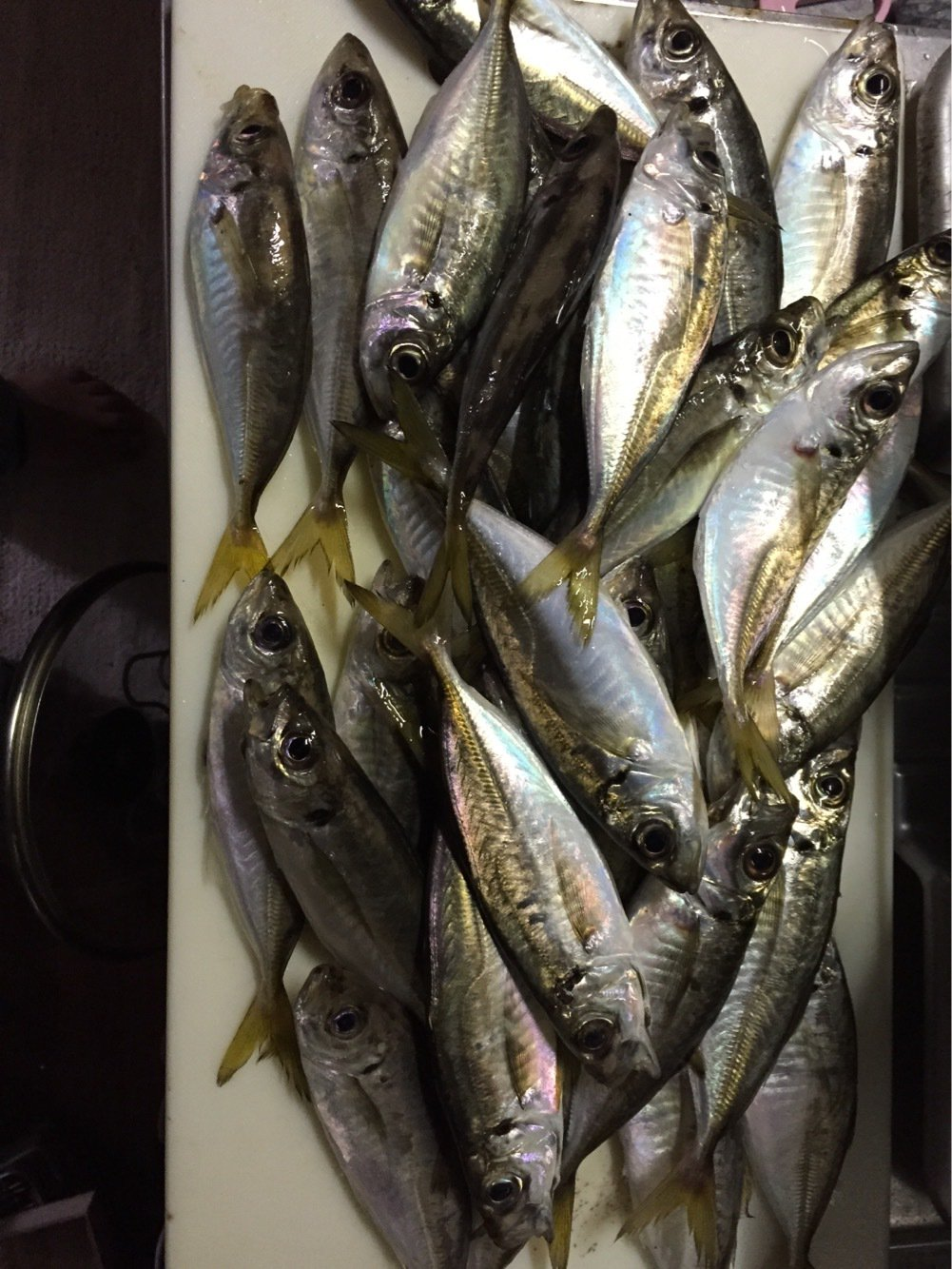 ナオタカーンさんの投稿画像,写っている魚はアジ