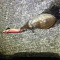 マルチさんの愛媛県松山市でのコウイカの釣果写真