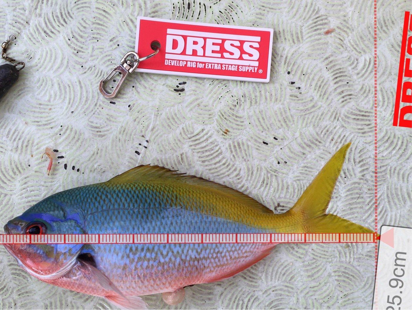 Shinさんの投稿画像,写っている魚はウメイロ