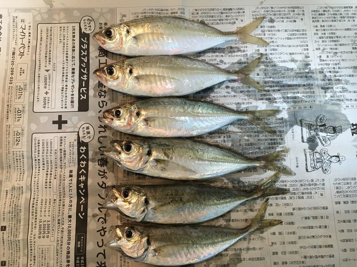マリさんの投稿画像,写っている魚はアジ