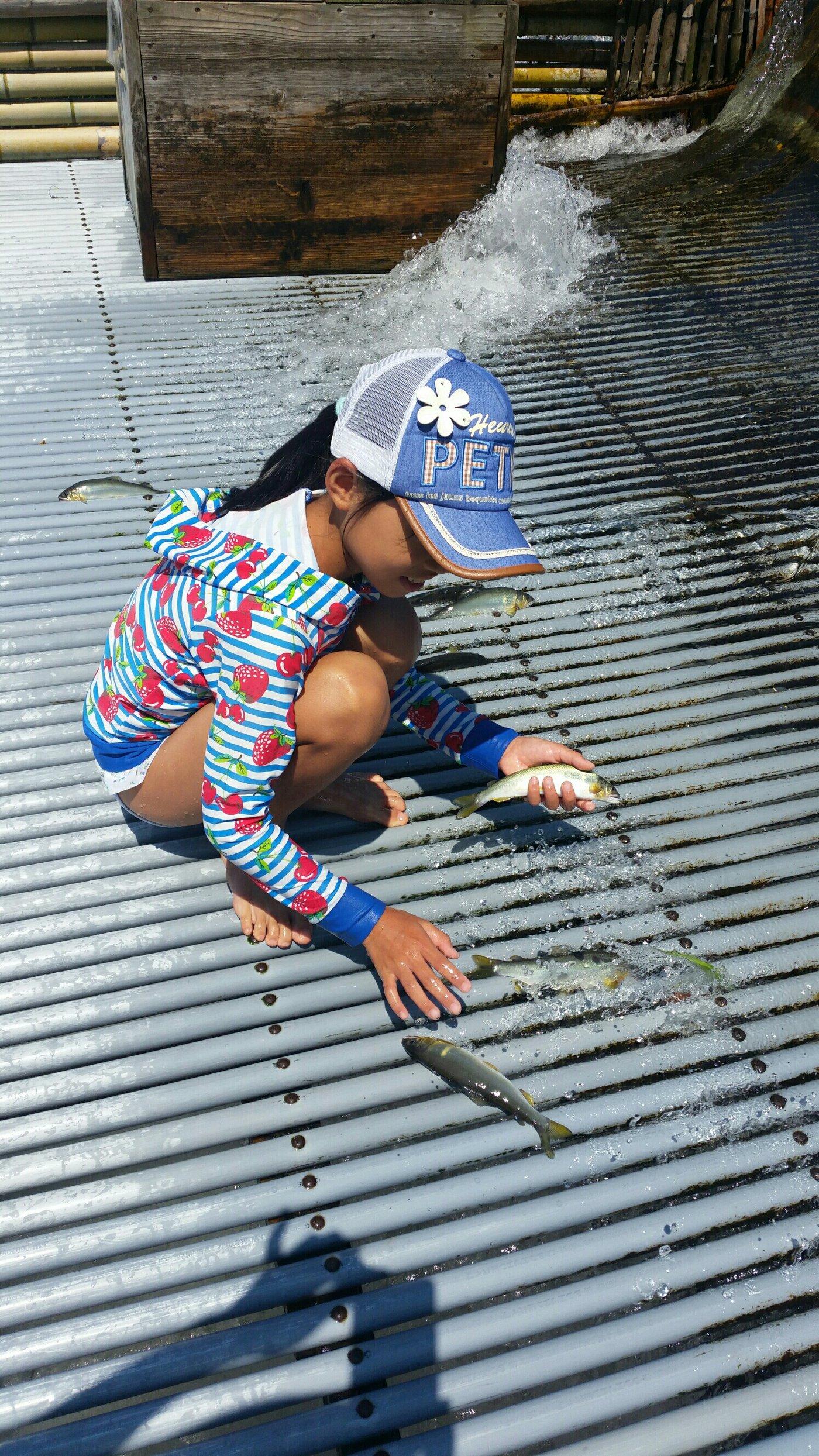 みゆきんぐさんの投稿画像,写っている魚はアユ