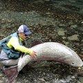 つっちーさんの群馬県多野郡での釣果写真