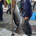 おさかなちゃんさんの神奈川県海老名市での釣果写真