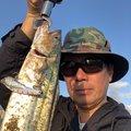 ながのさんの福岡県福岡市でのサワラの釣果写真