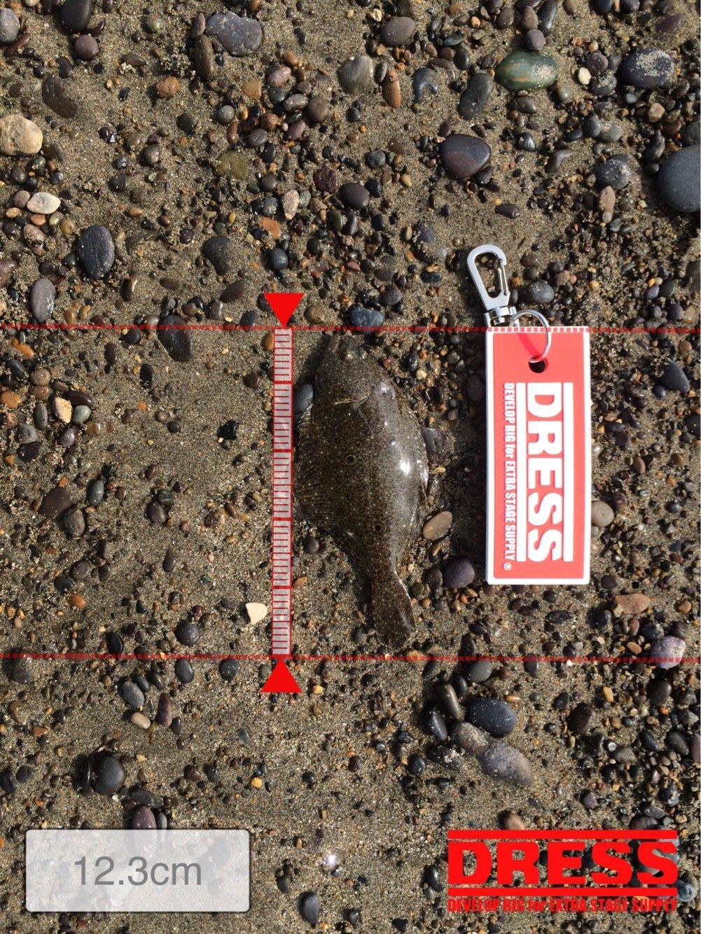 とんびさんの投稿画像,写っている魚はヒラメ