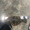 ククルさんの三重県四日市市でのヒラメの釣果写真
