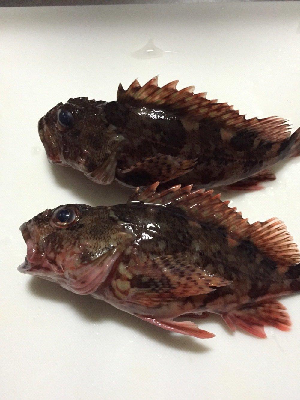 keitaさんの投稿画像,写っている魚はカサゴ