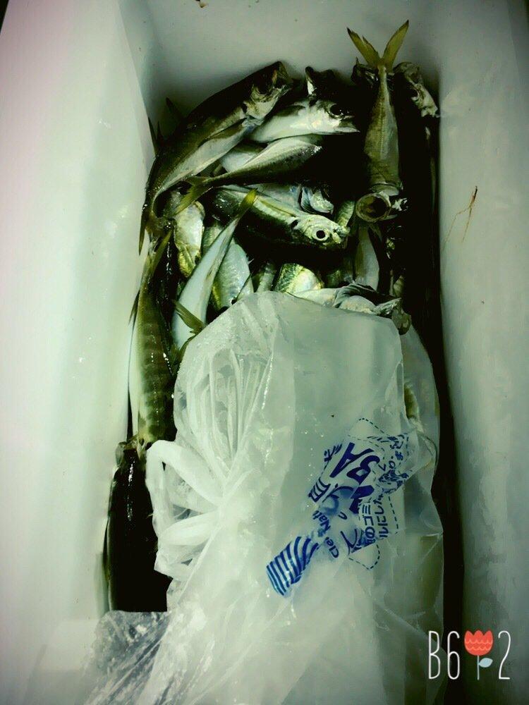 飯塚さんの投稿画像,写っている魚は