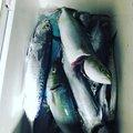 東 京太郎さんの静岡県沼津市でのマサバの釣果写真