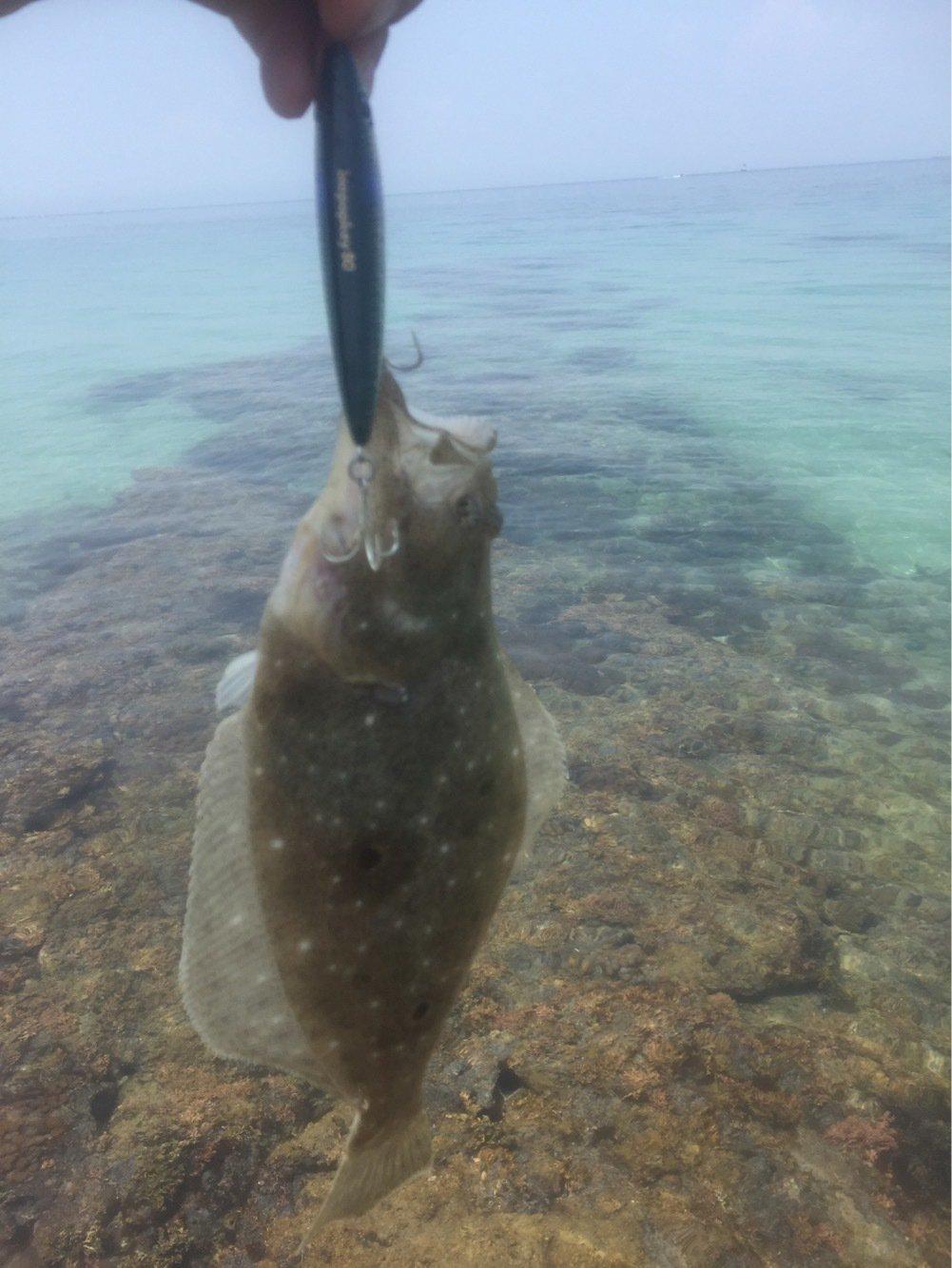 ムラテツさんの投稿画像,写っている魚はヒラメ
