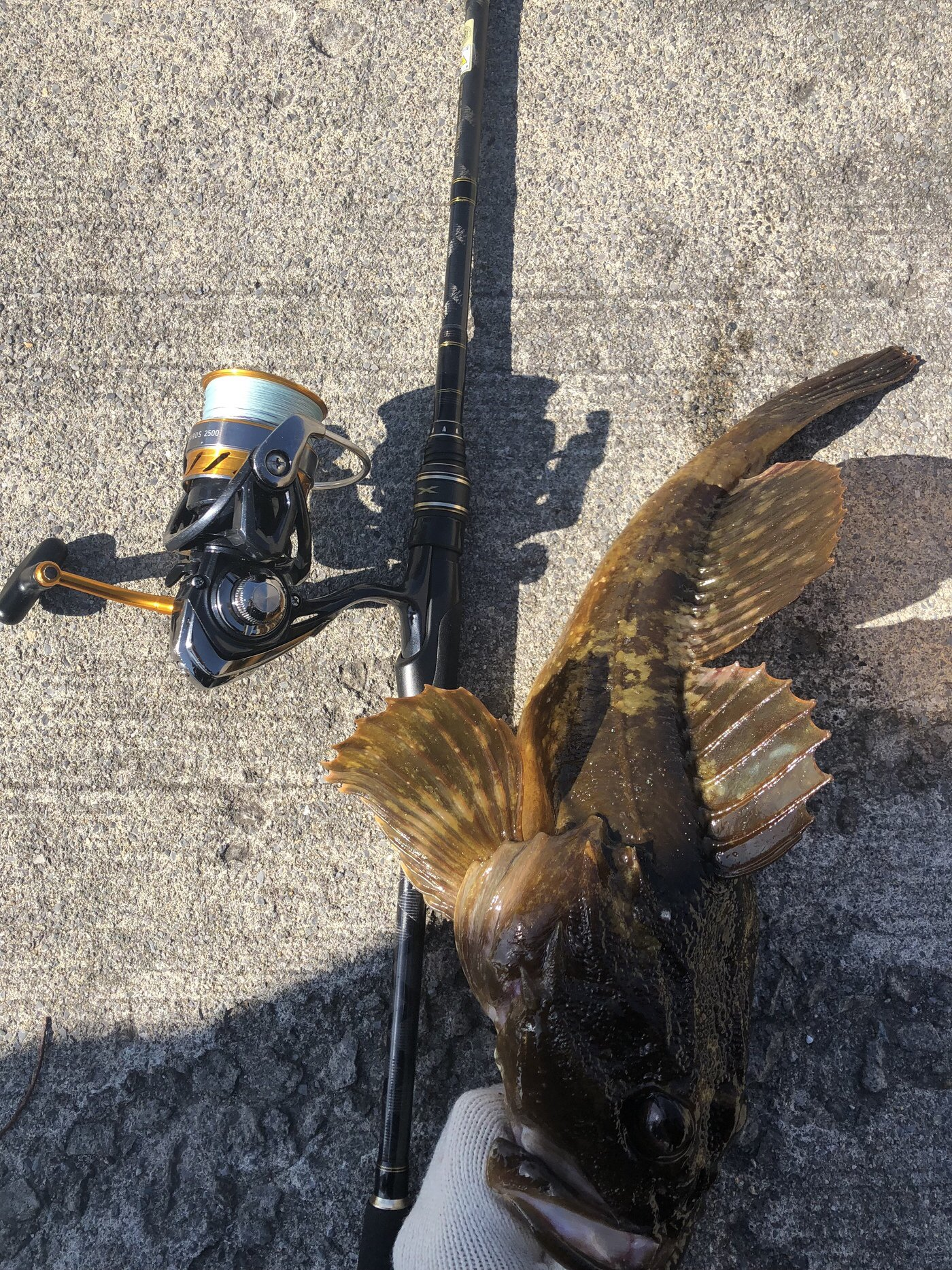 げんげんさんの投稿画像,写っている魚はカジカ