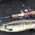キチさんの北海道網走郡での釣果写真