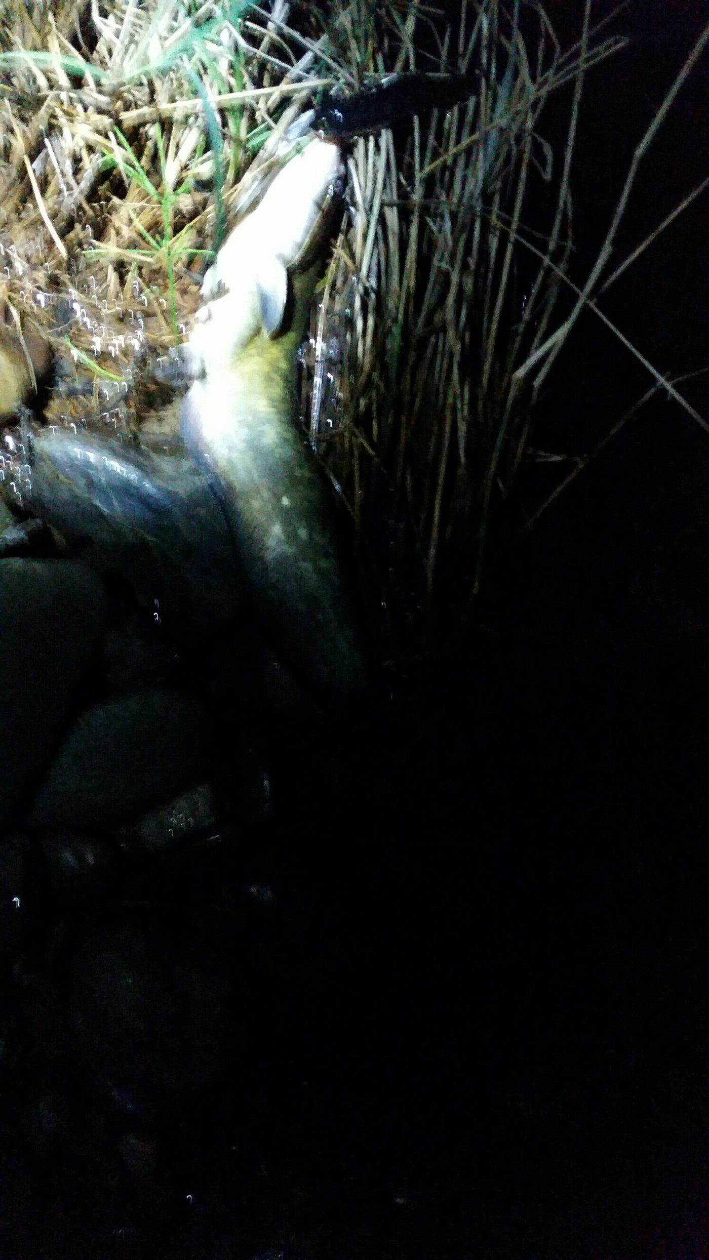 カズさんの投稿画像,写っている魚は
