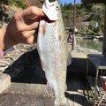 BBAさんの岐阜県郡上市での釣果写真