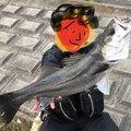 シーアツさんの茨城県潮来市でのスズキの釣果写真
