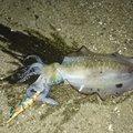 コウジさんの新潟県村上市での釣果写真