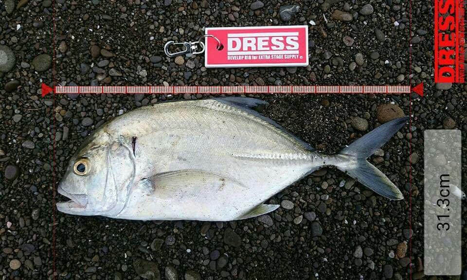 でんさんの投稿画像,写っている魚はギンガメアジ