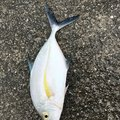 Sasasa teacherさんの沖縄県宮古島市での釣果写真