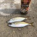 きょんさんの大分県東国東郡での釣果写真