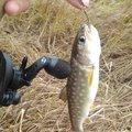 🦍さんの北海道根室市での釣果写真