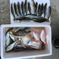 山彦さんの福井県三方上中郡での釣果写真