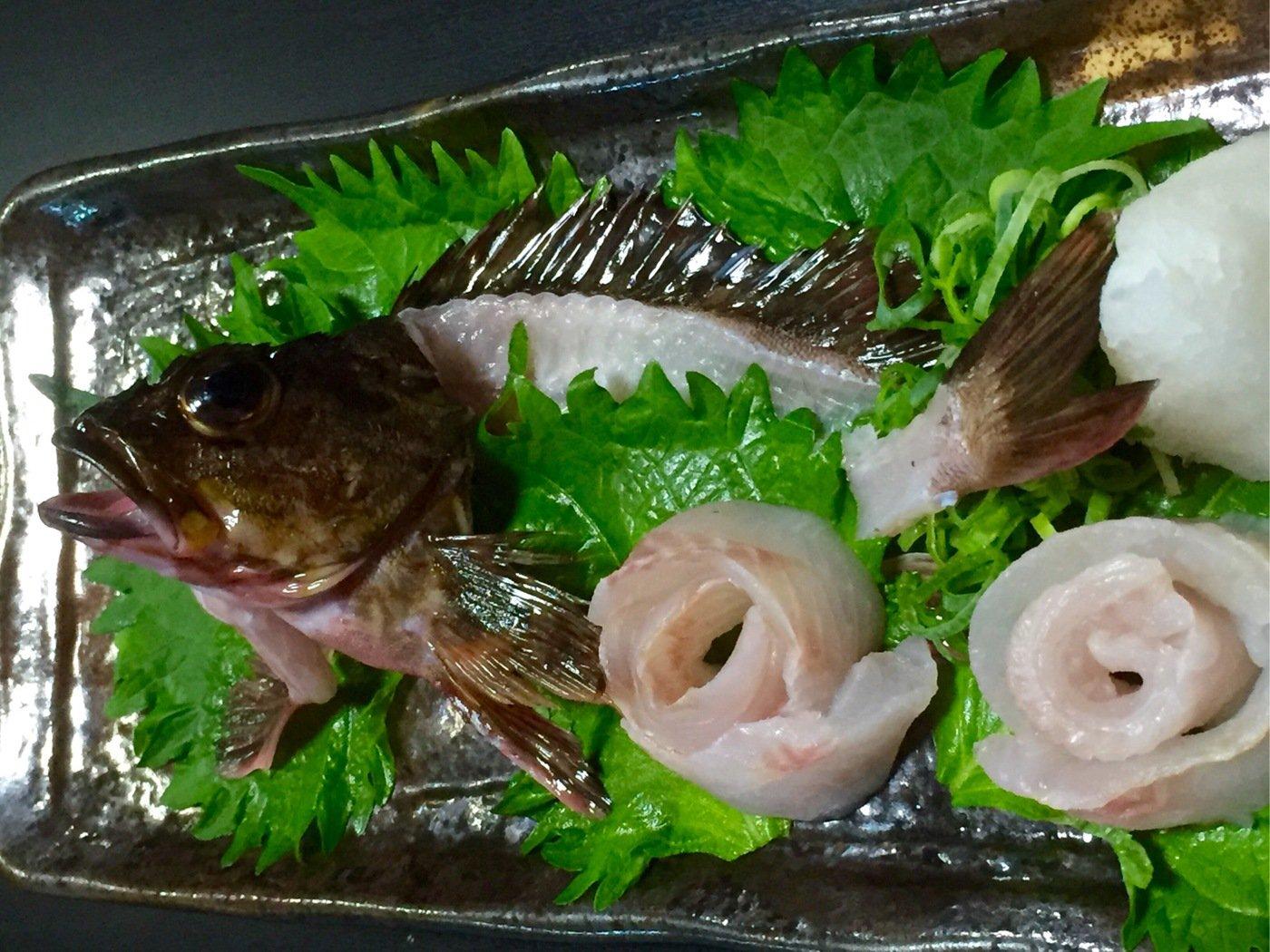 よしなり〜さんの投稿画像,写っている魚はカサゴ