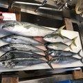 たなすけさんの青森県でのワラサの釣果写真