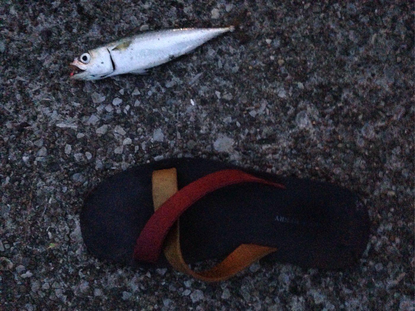 ヘナ・チョコ彦さんの投稿画像,写っている魚はゴマサバ