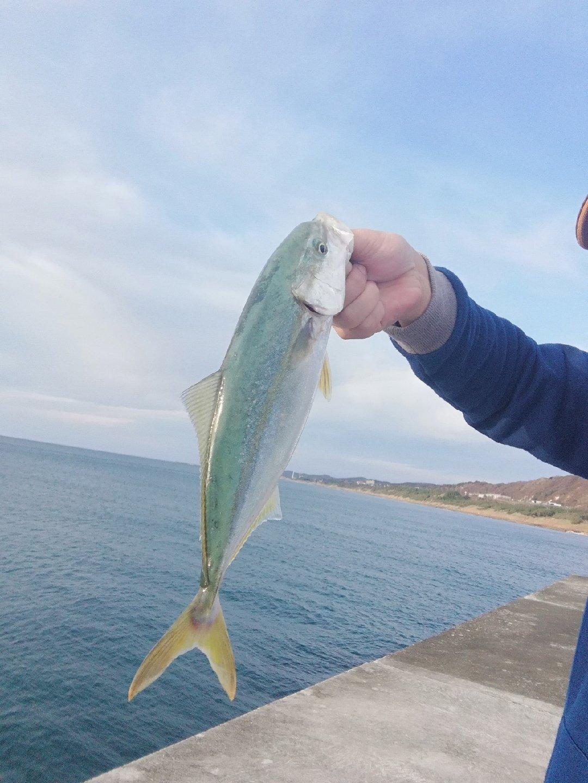 BOOOOZUさんの投稿画像,写っている魚は