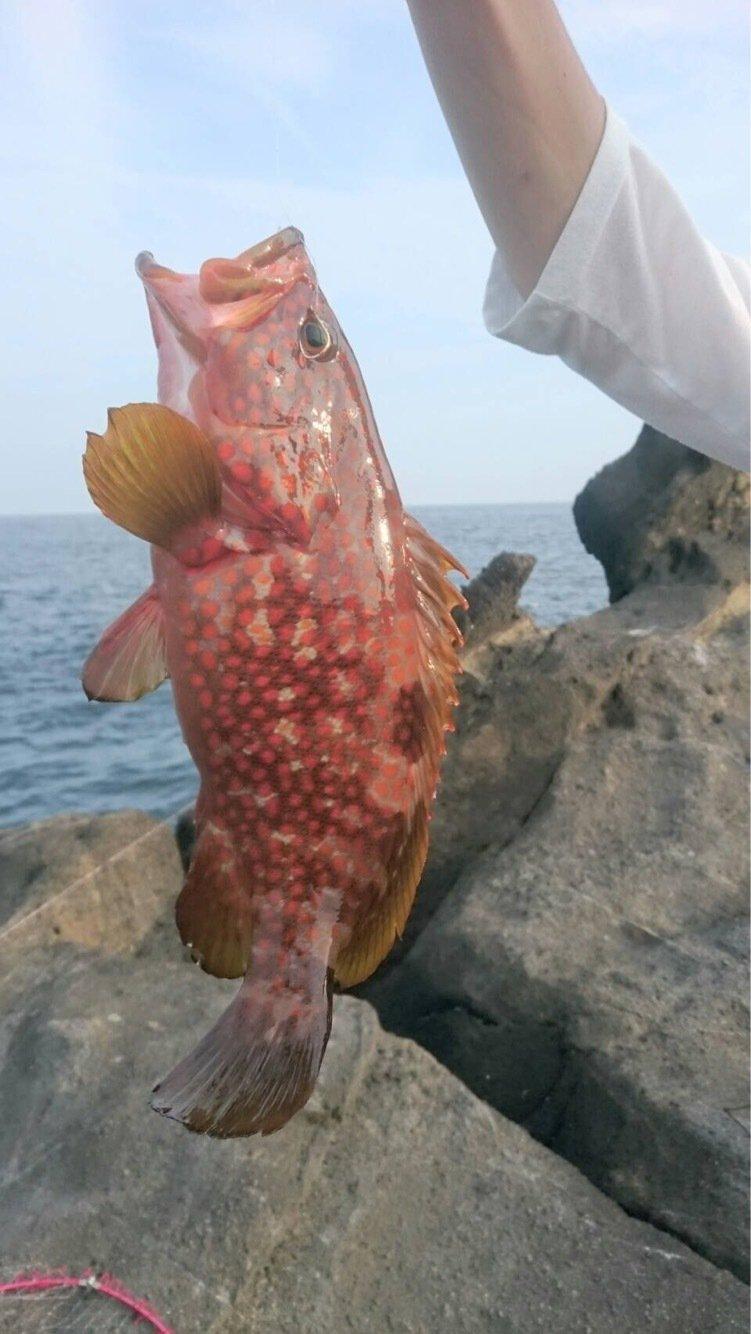 ノキアさんの投稿画像,写っている魚はキジハタ