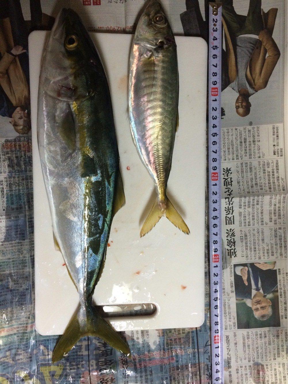 グランダーさんの投稿画像,写っている魚は