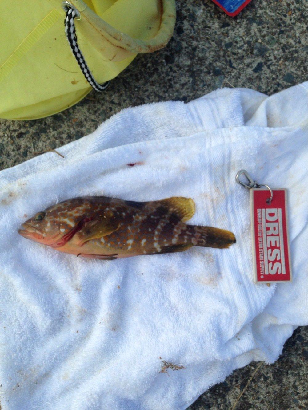 パンクンさんの投稿画像,写っている魚はアコウダイ