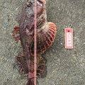 ハイラックス野郎さんの北海道根室市での釣果写真