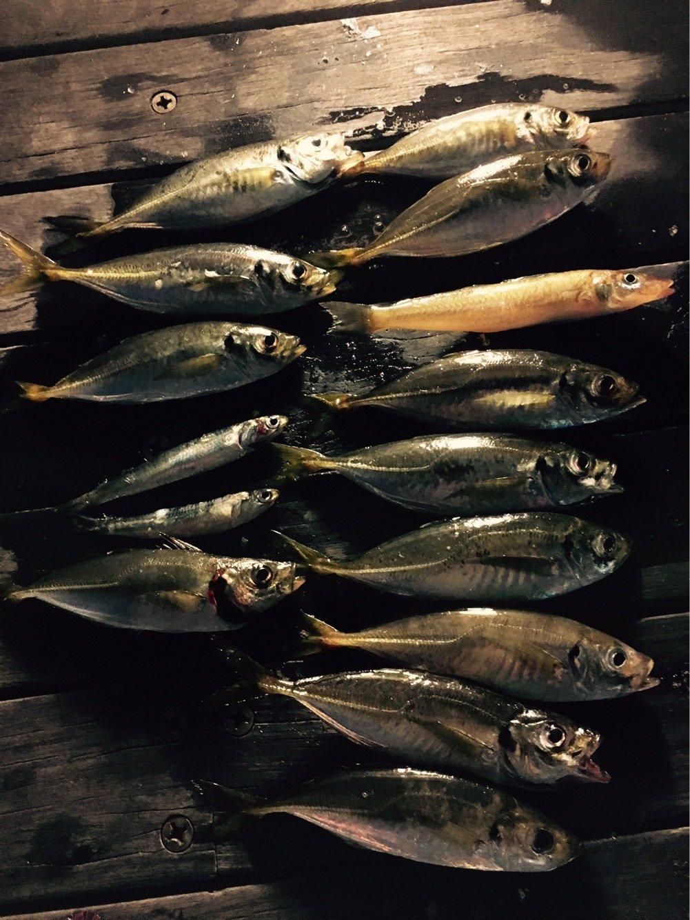 MASATOさんの投稿画像,写っている魚はアジ
