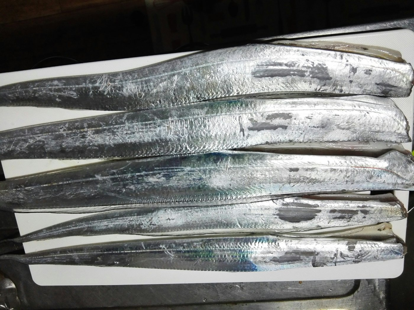 ぴろさんの投稿画像,写っている魚はタチウオ