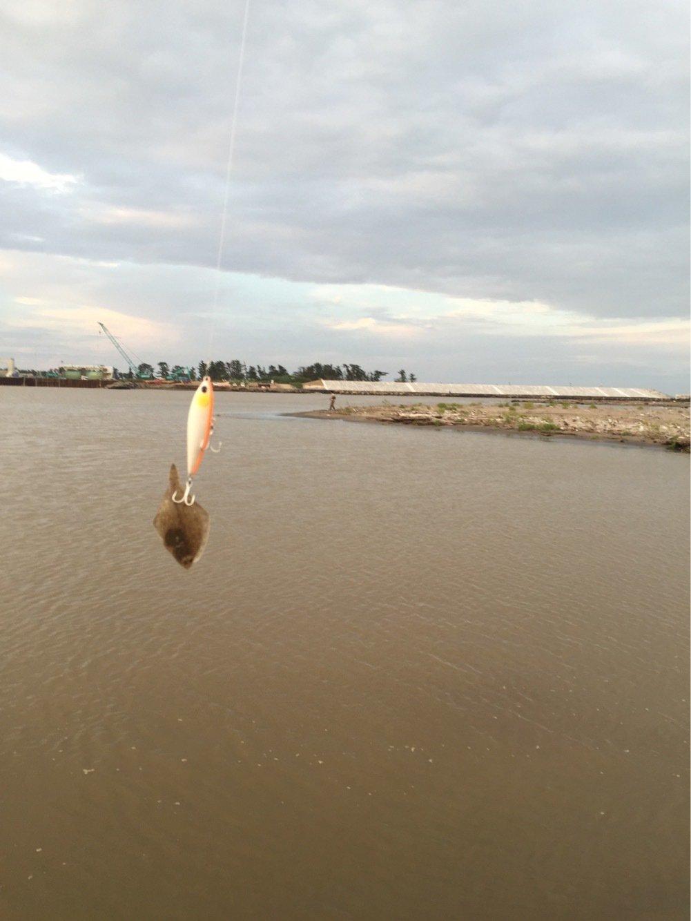 カオルさんの投稿画像,写っている魚はカレイ