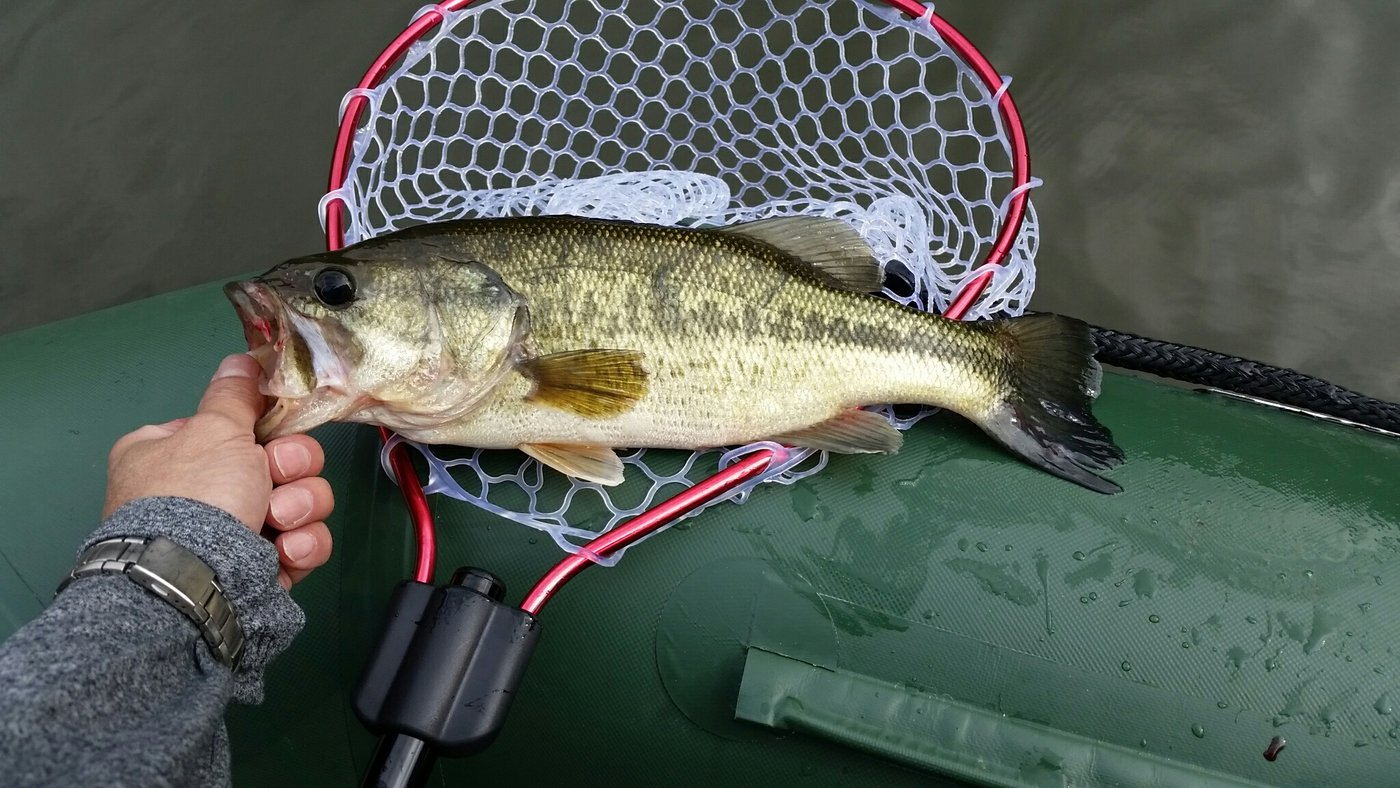 オヤッジーさんの投稿画像,写っている魚はブラックバス