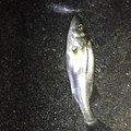 ノリさんさんの三重県桑名郡での釣果写真