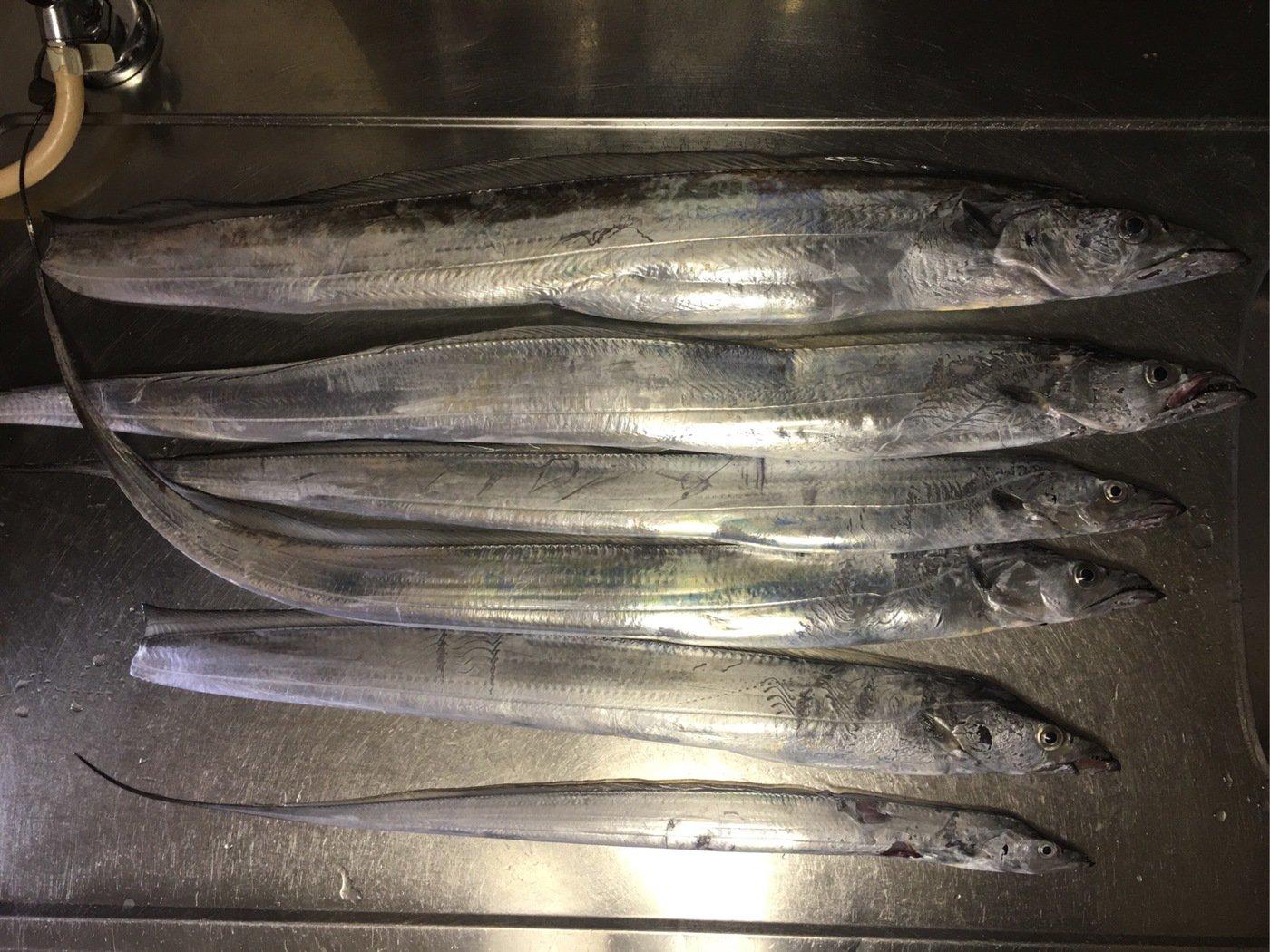 JAH GUIDANCEさんの投稿画像,写っている魚はタチウオ