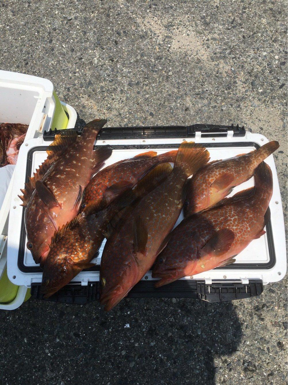 池上 代司治さんの投稿画像,写っている魚は