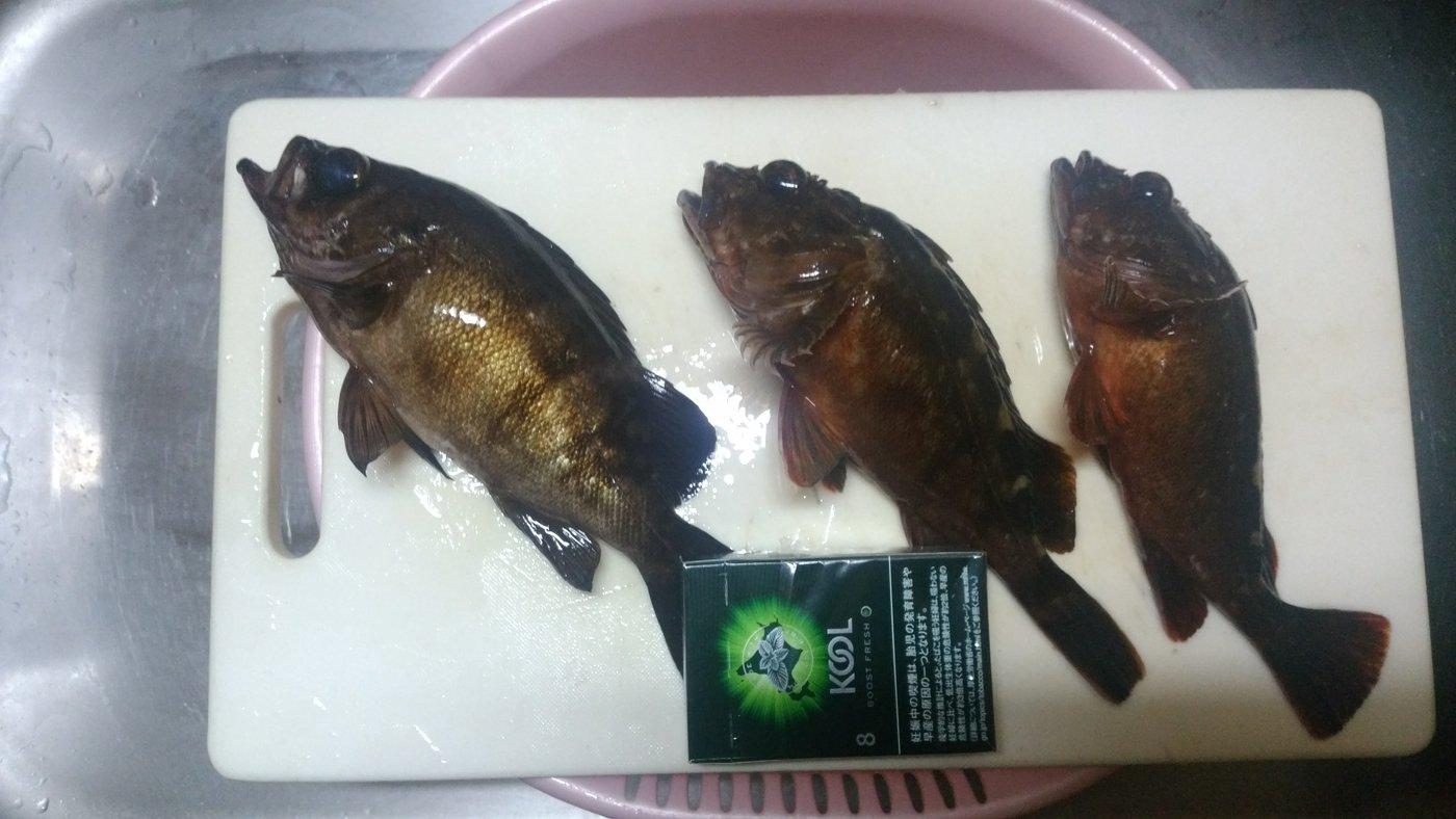凛さんの投稿画像,写っている魚はカサゴ,メバル