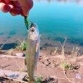 Leeさんの栃木県河内郡での釣果写真