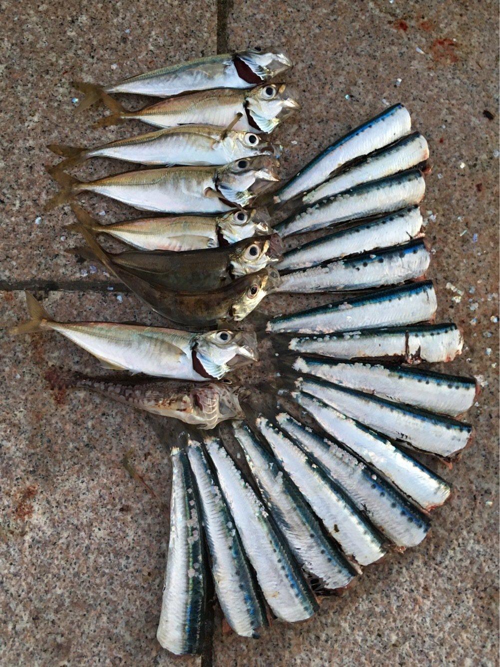 Murakameepさんの投稿画像,写っている魚は
